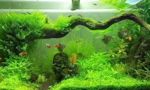 Зачем нужен аквариум?